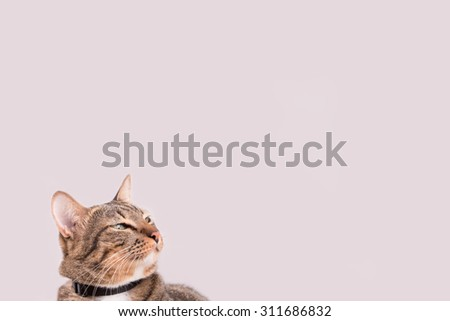 tabby cat looking something or It seems that imagination/vision. Place for text - stock photo