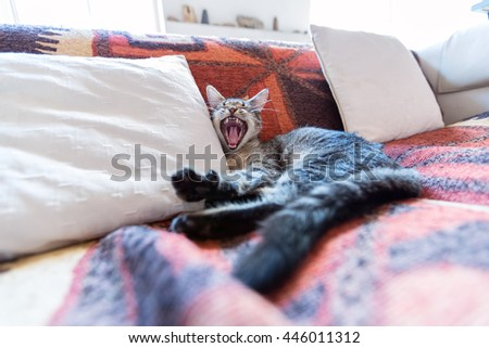 Tabby cat lying on a couch, yawning - stock photo