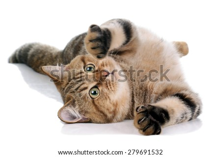 tabby cat lying on a white background - stock photo