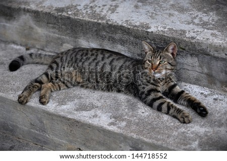 Tabby cat lying on the pavement. - stock photo