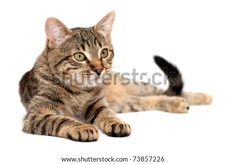 Tabby cat lying on white background - stock photo
