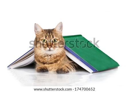 Tabby cat lying under a book isolated on white background - stock photo