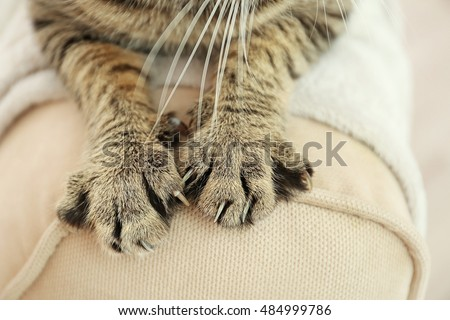 Tabby cat paws on backrest