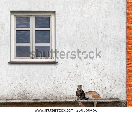 tabby cat sitting on the bench near the wall with a window - stock photo