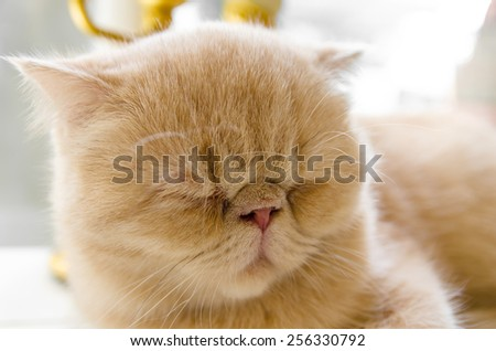 Tabby cat sleepy in the wooden bed. - stock photo