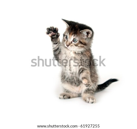 tabby cat swinging its paw on white background