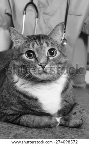 Tabby cat visits the doctor - stock photo