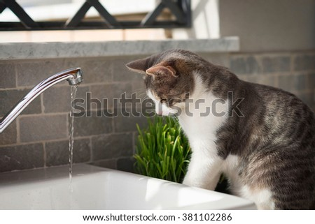 Tabby cat watching the water from the tap - stock photo