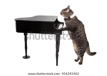 Tabby cat wearing tuxedo collar costume playing a toy grand piano isolated on white background