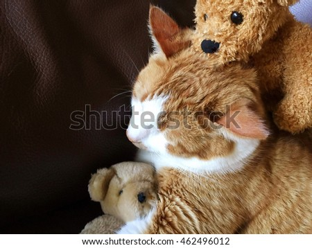 Tabby cat with old teddy bears
