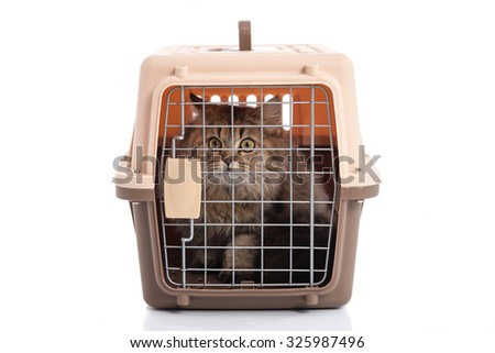 Tabby cat with pet carrier isolated on white background - stock photo