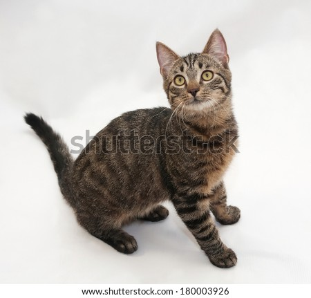 Tabby cat with yellow eyes sitting on gray background - stock photo