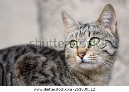 Tabby domestic kitten with big green eyes. Selective focus. - stock photo