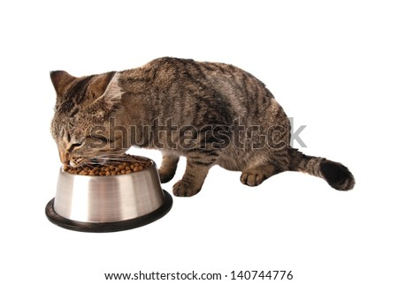 Tabby kitten eating kibble out of a silver dish on white - stock photo