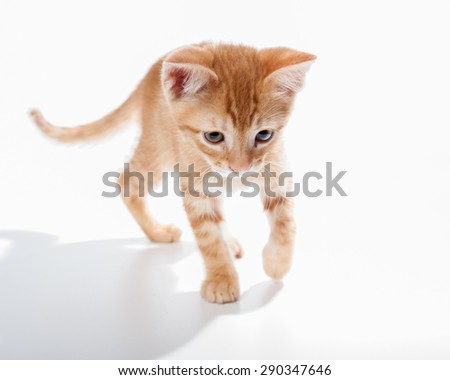Tabby kitten exploring his surroundings - stock photo
