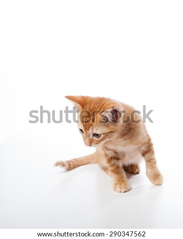 Tabby kitten looking for mischief - stock photo