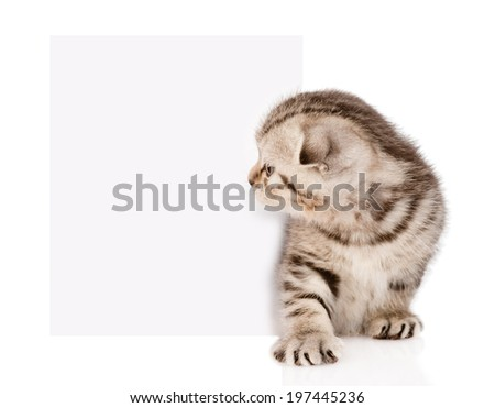 tabby kitten peeking out of a blank sign. isolated on white background - stock photo
