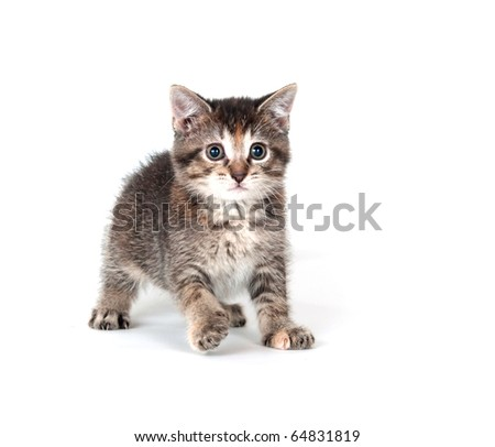Tabby kitten playing and swinging its paw on white background