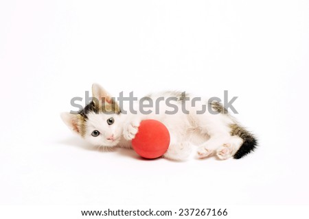 Tabby kitten playing with a red ball on a white background. - stock photo