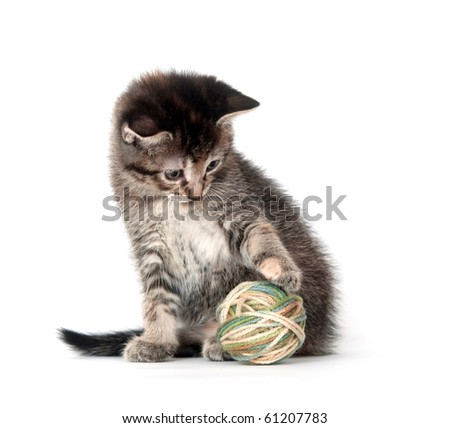 Tabby kitten playing with yarn on white background - stock photo