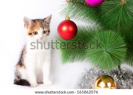 Tabby kitten sitting in Christmas decorations - stock photo