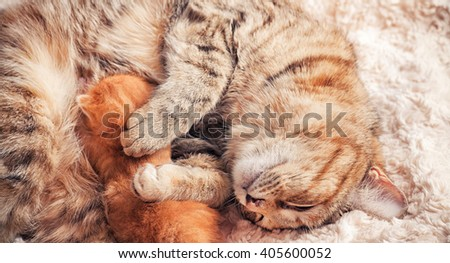 Tabby red kitten with mother - stock photo