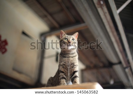 Tabby striped cat look around curiously on the top - stock photo
