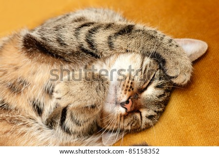 Tabby, sweet sleeping on the bed - stock photo