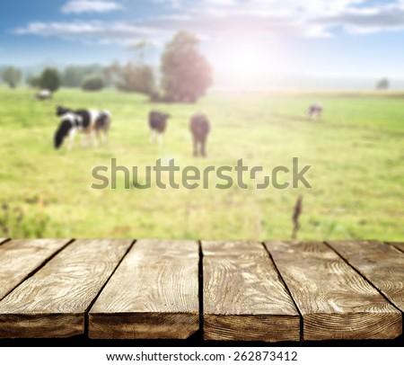 table and cows  - stock photo