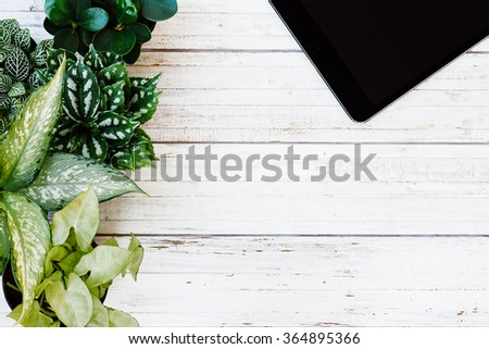 tablet with green plants and succulents in pots on the white vintage table. Hipster style  - stock photo