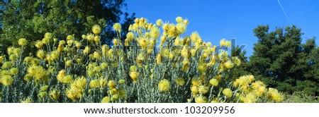 Taft Gardens in Spring, Ojai, California - stock photo