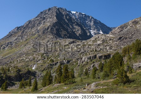 taiga, cedar tree, mountain  - stock photo
