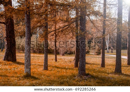 a report of taiga the largest land biome on earth Biomes lesson plan:  the driest biome on earth arid land with usually sparse vegetation and  taiga definition:a biome just south of the tundra characterized by.