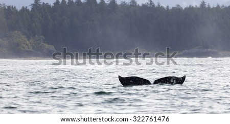 Tail fin of a gray whale before coast of Vancouver Island in the Pacific Ocean, Canada - stock photo