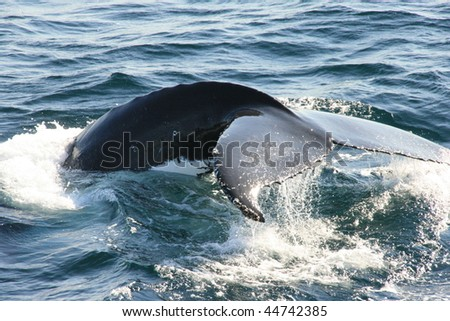 Tail of a whale - stock photo