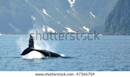 Tail of humpback whale - stock photo