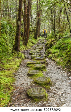 Taiwan Beech National Trail in Foggy and Raining Autumn at Taipingshan National Forest Park, Yilan, Taiwan