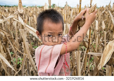 TAK THAILAND - SEP28 : Unidentified  Karen migrant child labour harvesting in cornfield at Ban Thaluang, Mae Ramad, Tak, Thailand on SEPTEMBER28,2015 - stock photo