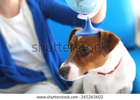 Take your dog on vacation.  Jack russell terrier dog with a globe held to his head.  - stock photo