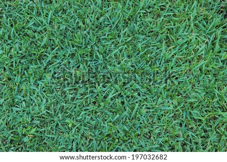 taken from the top view of green grass - stock photo