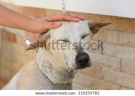 Taking a bath of adorable white dog - stock photo