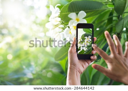 Taking pictures white flower with mobile smart phone in the nature background - stock photo