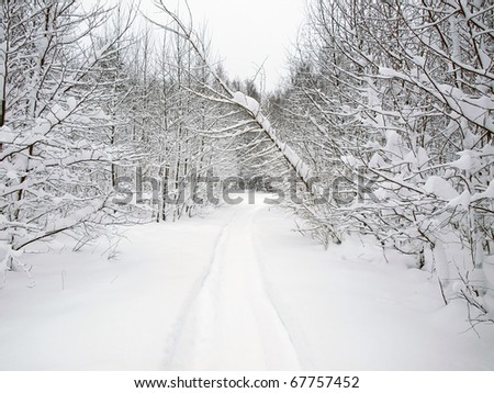 Tale in the forest - stock photo