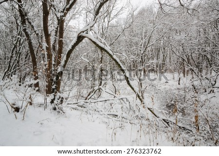 tales winter trees on snow in ukraine - stock photo