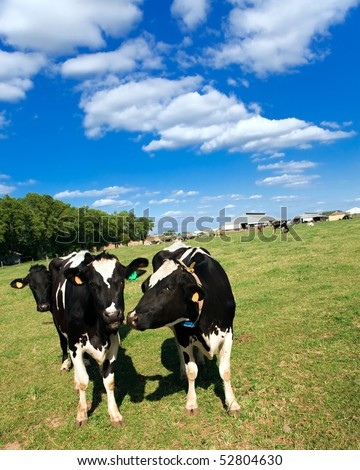 Talking Cows - stock photo