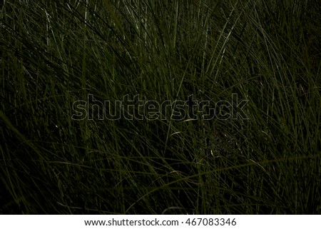 tall grass,abstract,background,color,nature,pattern,