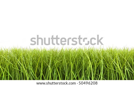 Tall grass against a white background - stock photo