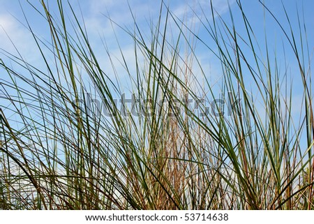 tall grass against cloudy pale blue sky