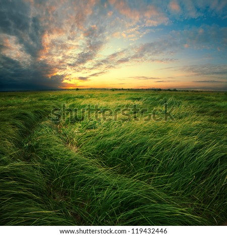Tall grass are on the flood meadow on background of dramatic clouds during sundown. - stock photo