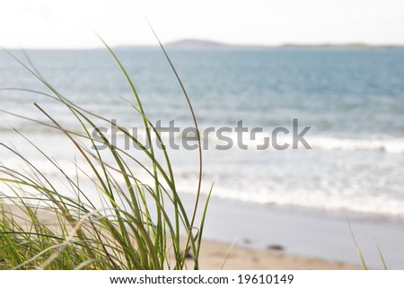 tall grass on the sand dunes in kerry ireland - stock photo